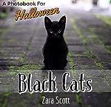 Black Cats: A Photobook For Halloween (Holiday Season Pets 1) (English Edition)