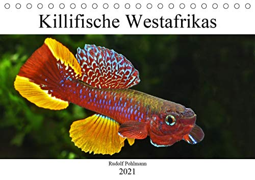 Killifische Westafrikas (Tischkalender 2021 DIN A5 quer)