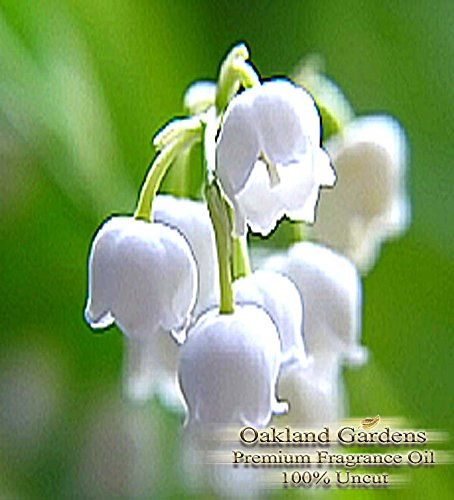 BULK x Lilly of the Valley Fragrance Oil - The delicate, white-green lily of the valley with heart notes of rose, jasmine and lilac - By Oakland Gardens (120 mL - 4.0 fl oz Bottle)