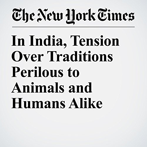 In India, Tension Over Traditions Perilous to Animals and Humans Alike copertina