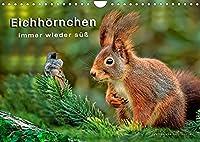 Eichhoernchen - immer wieder suess (Wandkalender 2022 DIN A4 quer): Eichhoernchen - flinke kleine Kobolde in Wald und Park. (Monatskalender, 14 Seiten )