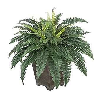 House of Silk Flowers Artificial Fern in Small Grey-Washed Wood Planter