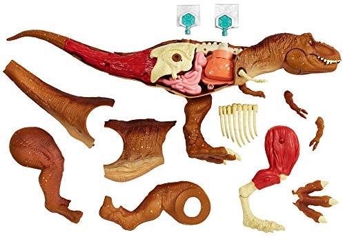 Jurassic World- Kit de Anatomía de Tyrannosaurus Rex, Multi