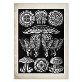 Marine Kreaturen Vintage Poster Quallen Korallen Grünalgen