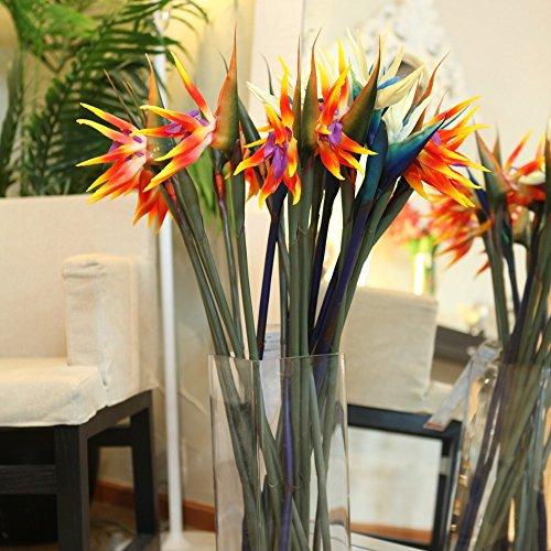 Strelitzia reginae graines de pots de fleurs jardinières Toutes sortes de couleur hybride oiseau paradis Bonsai plantes Graines 50pcs