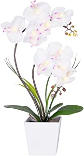 Best live phalaenopsis orchids for sale Reviews