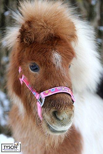 Tysons Breeches Halfter Blümi Minishetty Fohlen Falabella Mini Pony Shetty Minipony Hellblau Rosa Lila Gr. MMS MS S P (MMS, Rosa)