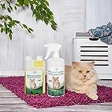 Geruchsneutralisierer Spray für Katzen – natürlicher Katzenurin Entferner – gegen Katzenklo Geruch - 3