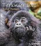 Tierkinder 2022 - Wand-Kalender - 30x34: Baby Animals