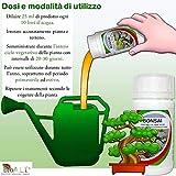Zoom IMG-2 fertilizzante bonsai per crescita forte