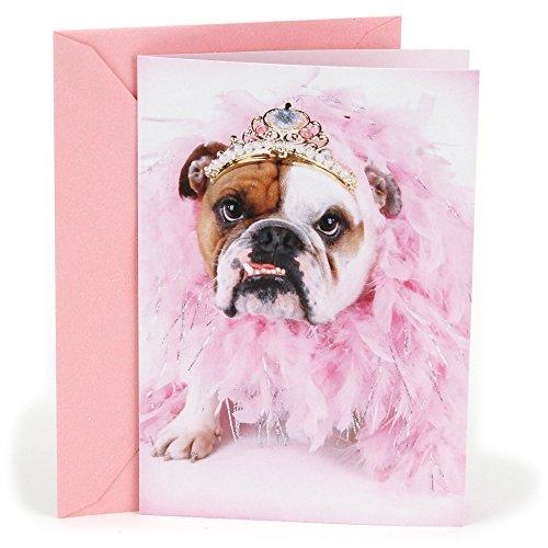 Hallmark Shoebox Funny Birthday Greeting Card (Bulldog in Tiara)