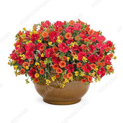 200pcs Bonsai couleurs mélangées Petunia Seeds belles fleurs pour jardin Plantes Bonsai Pétunia Graines de fleurs Facile à cultiver des plantes Jaune clair