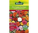 Dehner Blumen-Saatgut, Portulakröschen, 'Gefüllte Prachtmischung', 5er pack (5 x 0.7 g)