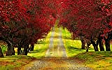 Rompecabezas Para Adultos 1000 Piezas Árboles De Follaje Rojo Camino Montaje De Madera Decoración Para El Hogar Juego De Juguetes Juguete Educativo Para Niños Y Adultos