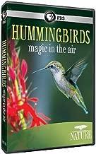super hummingbirds nature