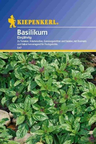 Basilicum fijnbladerig eenjarig