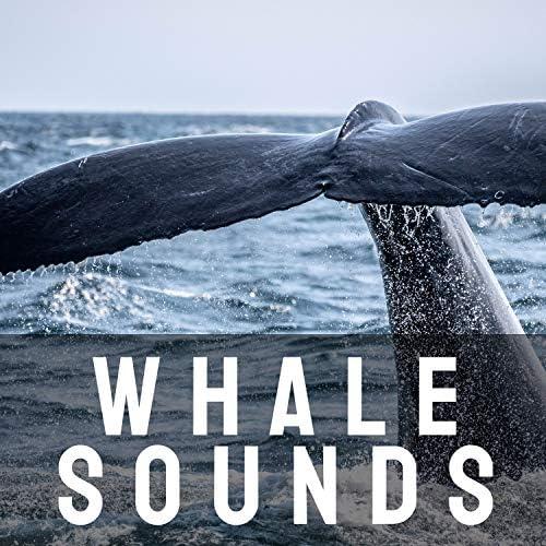 ASMR, Whale Song & Musica Relajante