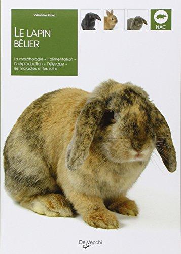 La lapin bélier