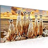 Bilder Erdmännchen Wandbild 100 x 40 cm Vlies - Leinwand