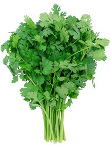 87G Loisirs Coriandre Graines bio ~ Coriandre Spice ~ Culinary Herb Garden