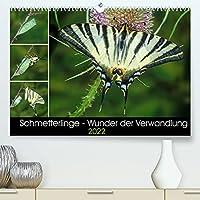 Schmetterlinge - Wunder der Verwandlung (Premium, hochwertiger DIN A2 Wandkalender 2022, Kunstdruck in Hochglanz): Einheimische Schmetterlinge und die Faszination ihrer Metamorphose. (Monatskalender, 14 Seiten )