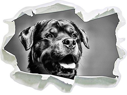Monocrome, Treuer Rottweiler Papier im 3D-Look, Wand- oder Türaufkleber Format: 62x45cm, Wandsticker, Wandtattoo, Wanddekoration