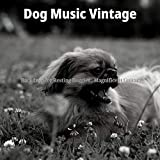 Inspired Ambiance for Relaxing Dogs