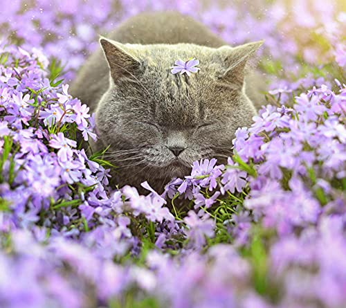 Kit de pintura de diamante 5D Dormir gato gris en flores taladro completo diamante bordado pintura DIY bordado punto de cruz pintura para decoración de la pared del hogar
