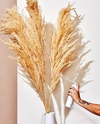 NICCU - Pampa essiccata in erba naturale, 70 pezzi, decorazione per fiori secchi boho, decorazione fai da te per soggiorno, camera da letto, bagno, balcone, tavolo (naturale)