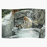 Monkey York Zoo Baby Central New Park Animals Regalo para la decoración del hogar Wall Art Print Poster 11.7 x 16.5 inch