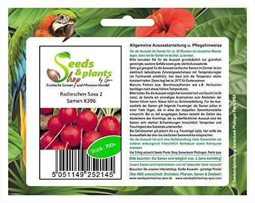 Stk - 700x Radieschen Saxa 2 - Samen Rettich Gemüse Salat Garten Kräuter K396 - Seeds Plants Shop Samenbank Pfullingen Patrik Ipsa
