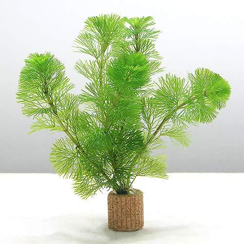 (水草)メダカ・金魚藻 ライフマルチ(茶) カボンバ(3個)