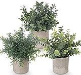 ilauke - Juego de 3 mini plantas artificiales en maceta de eucalipto de plástico, plantas de romero sintético para el hogar, jardín, oficina, escritorio, ducha, decoración de la habitación