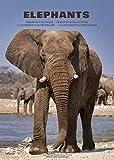 Calendario de cumpleaños ELEPHANTS de los fascinantes elefantes africanos (Calendario de cumpleaños, siempre de 12 meses, formato A3, 4 idiomas)