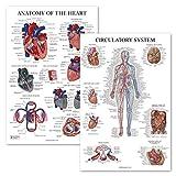 2 Pack - Circulatory System & Heart Anatomy Posters - Set of 2 Anatomical Charts - Laminated 18' x 27'