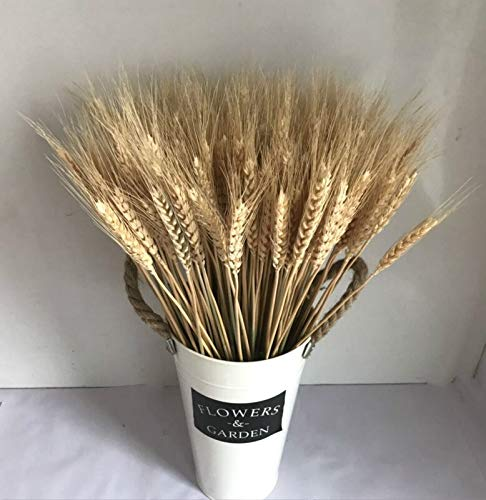 Stephen Artificial & Dried Flowers - 30pcs Natural Dried Flowers Rabbit Tail Grass Bouquet for Home Real Plants Romantic Wedding Decoration Flower Arrangement - by 1 PCs
