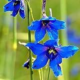 200 Stück Samen Umweltfreundliche, fruchtbare, frische, gesunde...