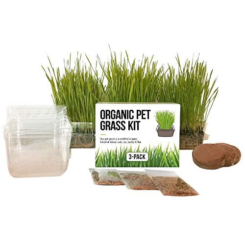 Cat Grass Growing Kit - 3 Pack Organic Seed, Soil and BPA Free containers (Non GMO). All of Our Seed is Locally sourced! Perfect Gift for pet and pet Lovers.