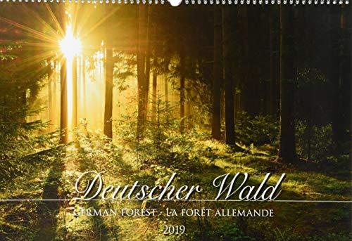 Deutscher Wald 2019 - Bildkalender quer (50 x 34) - Bäume - Landschaftskalender - Naturkalender