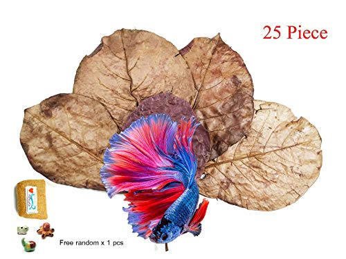 FANCYTE 18-25CM 50 Grams(25PIECES ) INDIAN ALMOND LEAVES Fish Tank for Shrimp Crayfish, Betta Fish ,Improve Comfort by Simulating House For Fish Healthy