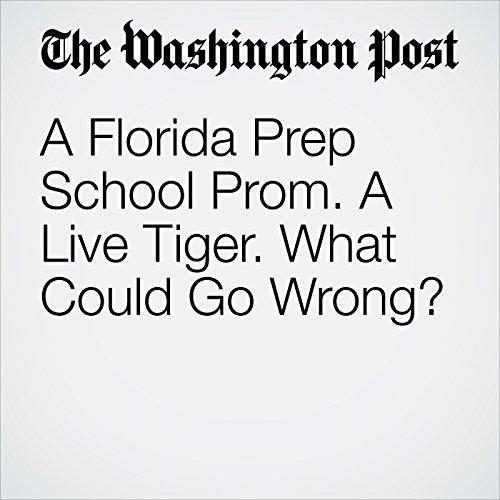 A Florida Prep School Prom. a Live Tiger. What Could Go Wrong? copertina