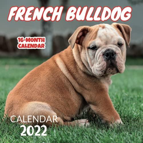 French Bulldog Calendar monthly: French Bulldog Wall Calendar 2022-2023 Size 8.5 x 8.5 Inch, Home And Office Calendar,16 Month Calendar 2022