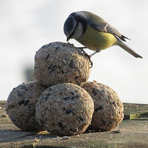 Donath Wintervogelfutter Premium Meisenknödel - MaxiEimer (50 x 100g ohne Netz)
