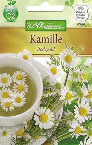 Chrestensen Kamille 'Bodegold'
