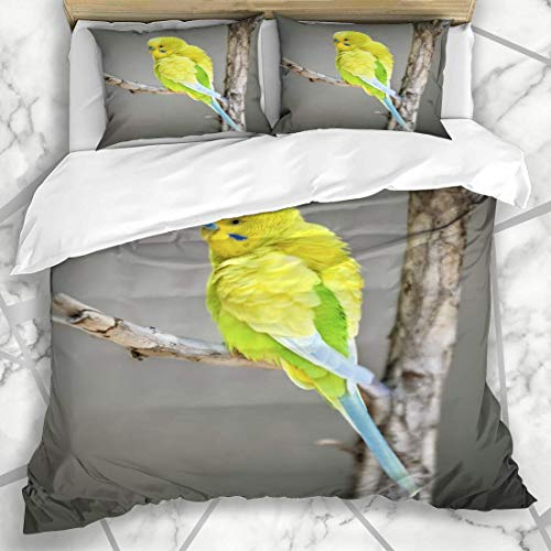 Juegos de fundas nórdicas Pico Periquito amarillo australiano en rama Periquito doméstico Naturaleza Diseño aviar Ropa de cama de microfibra lúdica con 2 fundas de almohada Cuidado fácil Antialérgico