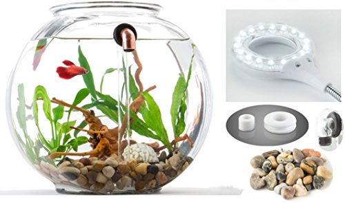 NoClean Aquariums: STARTER KIT - Eco-Friendly, Self-Cleaning,...