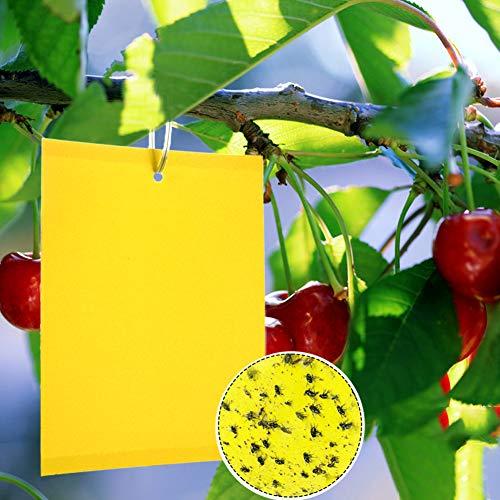 Panngu 20 Plant Flycatcher, trappole appiccicose Gialle bilaterali per Insetti Volanti - volando in Serre, afidi, moscerini fungini, leafminers e Mosche Bianche (6x8 Pollici)