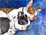 5D DIY Diamond Painting Digital Set, Full Diamond Embroidery Craft Home Wall Decoration Painting,Colorful Boston Terrier Cute pet Dog(30X40cm / 12X16 inches)
