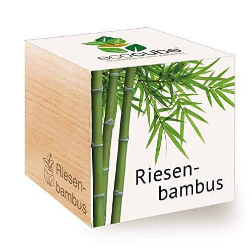 Feel Green Ecocube - bambù Gigante, Idea Regalo sostenibile (100{0c13e64ecb0c7a0b5abe66ac9fb6bd62ca017cb7b313bb096f491c3c86533d34} Eco Friendly), Grow Your Own/Set di Coltivazione, Piante nel Dado in Legno, Made in Austria