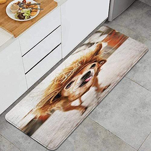 PANILUR Alfombras para Cocina Baño de Cocina Absorbente Alfombrilla,Primavera Lindo Chihuahua León Disfraz Animales Fauna Perro Mejor Raza Amigo Canino,para Dormitorio Baño Antideslizantes Lavables